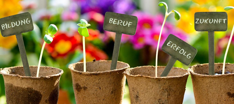 4 Pflanztöpfe nebeneinander mit kleinen Pflänzchen und Setzkärtchen darin, auf denen geschrieben steht: Bildung, Beruf, Erfolg, Zukunft.